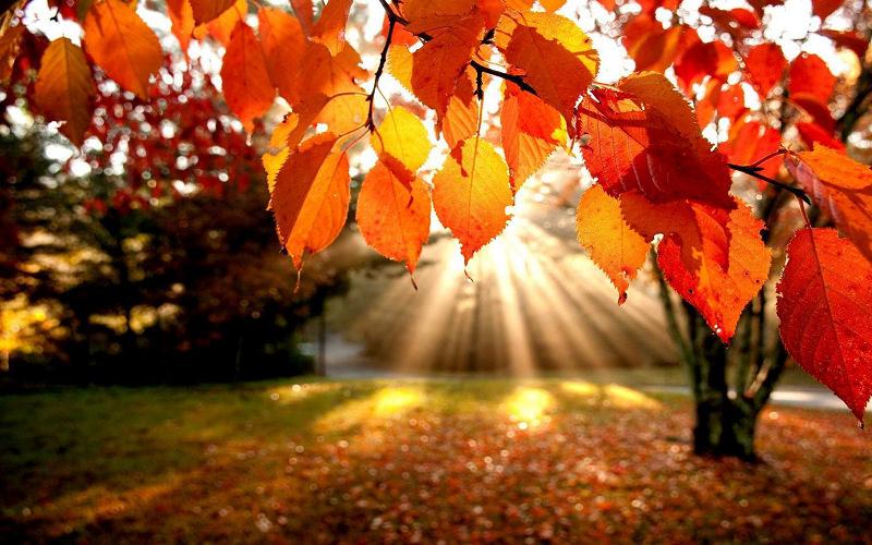 秋分來臨將轉為乾燥涼爽舒適秋天氣候